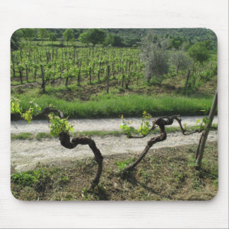 Vineyard in Chianti Region of Italy Mouse Pad