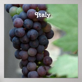 Vineyard in Italy Print