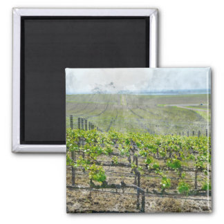Vineyard in Napa Valley California Magnet