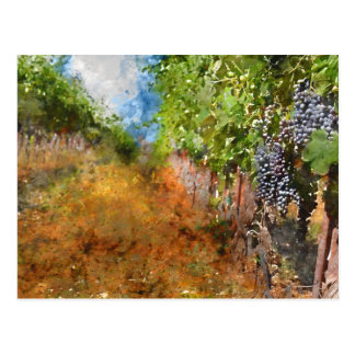 Vineyard in Napa Valley California Postcard
