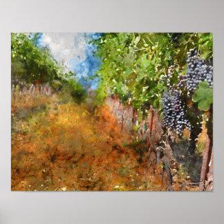 Vineyard in Napa Valley California Poster