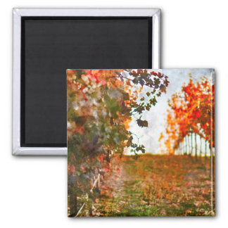 Vineyard in Napa Valley during Fall 2 Inch Square Magnet