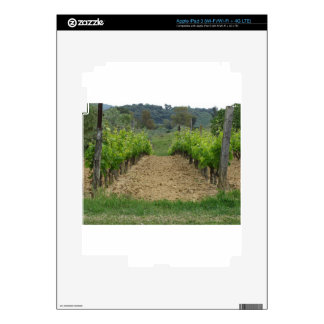 Vineyard in spring . Tuscany, Italy iPad 3 Decals