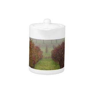 vineyard in the fog in autumn teapot