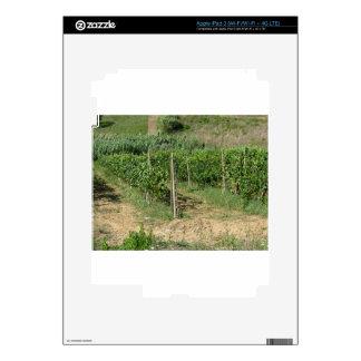 Vineyard in Tuscany, Italy iPad 3 Skin