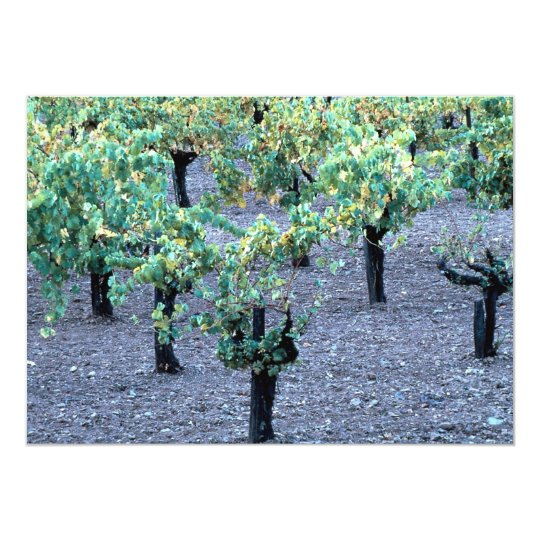 Vineyard, Napa Valley, California from the Forest Card