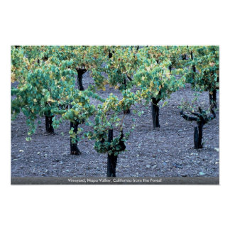 Vineyard, Napa Valley, California from the Forest Posters