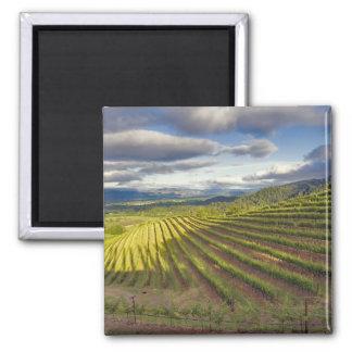 Vineyard. Napa Valley. Napa. Napa County, 2 Inch Square Magnet
