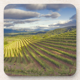 Vineyard. Napa Valley. Napa. Napa County, Coaster