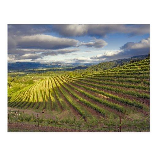 Vineyard. Napa Valley. Napa. Napa County, Postcards