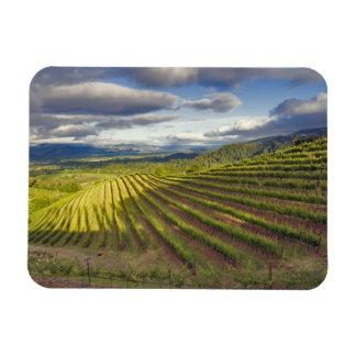 Vineyard. Napa Valley. Napa. Napa County, Rectangular Photo Magnet