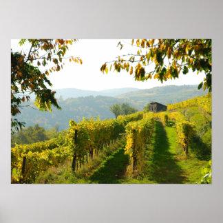 Vineyard near Krems Poster