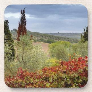 Vineyard near Montalcino, Tuscany, Italy Beverage Coasters