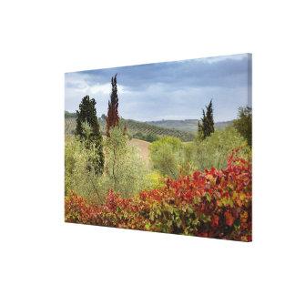 Vineyard near Montalcino, Tuscany, Italy Canvas Print