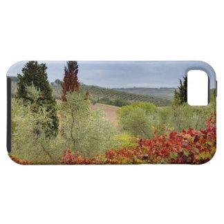 Vineyard near Montalcino, Tuscany, Italy iPhone 5 Cover