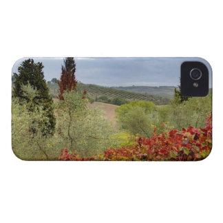 Vineyard near Montalcino, Tuscany, Italy iPhone 4 Case-Mate Cases