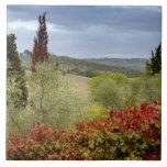 Vineyard near Montalcino, Tuscany, Italy Large Square Tile