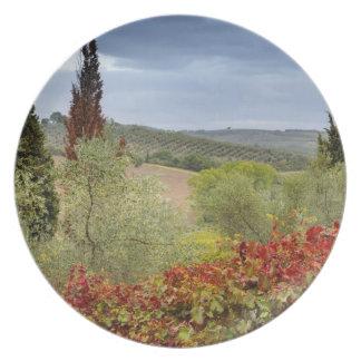 Vineyard near Montalcino, Tuscany, Italy Party Plates