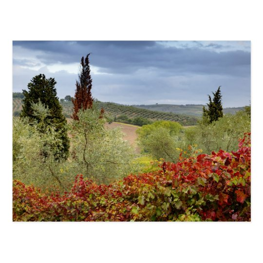 Vineyard near Montalcino, Tuscany, Italy Postcard