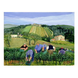 Vineyard Olives and Sunflowers Postcard