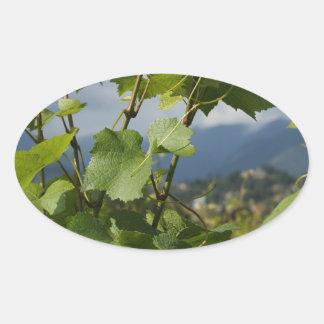 vineyard oval sticker