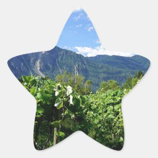 Vineyard southern BC, Canada Star Sticker