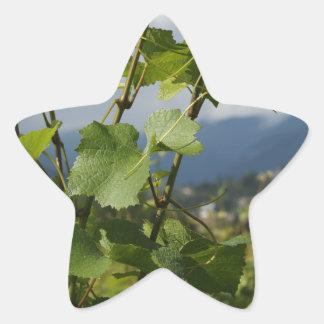 vineyard star sticker