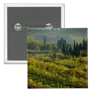 Vineyard, Tuscany, Italy 2 Inch Square Button