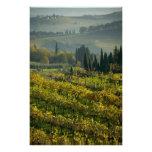 Vineyard, Tuscany, Italy Photo Print