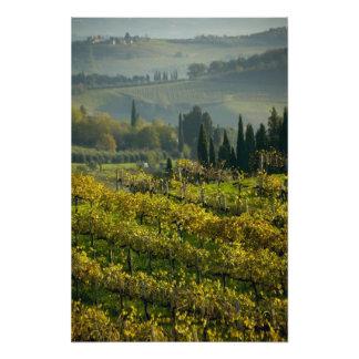 Vineyard, Tuscany, Italy Art Photo