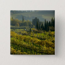 Vineyard, Tuscany, Italy Pinback Button