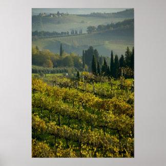 Vineyard, Tuscany, Italy Print