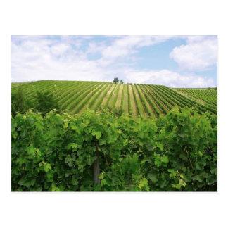 Vineyard - Vignoble Postcard