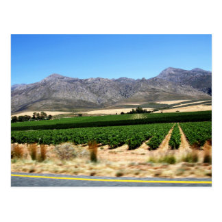 Vineyards and Mountains into Franschhoek, S Africa Postcard