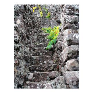 Vineyards in Azores islands Flyer