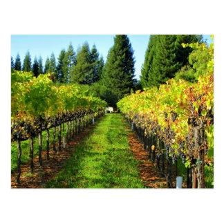 Vineyards in Healdsburg, CA  Postcard
