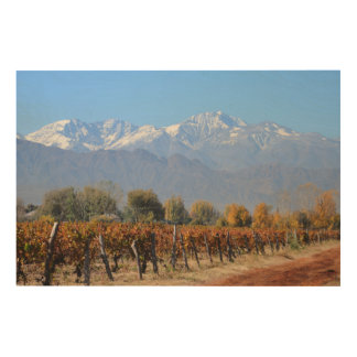 Vineyards In The Fall Of Mendoza, Argentina Wood Print
