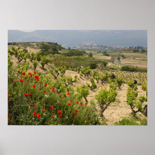 Vineyards near Laguardia, capital of La Rioja Poster