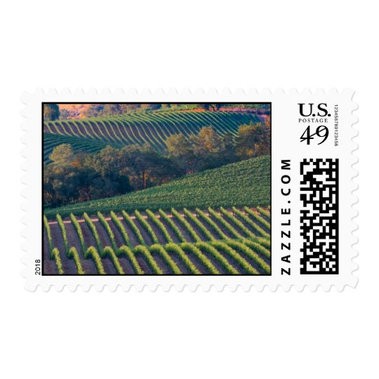 Vineyards of Russian River Valley Postage