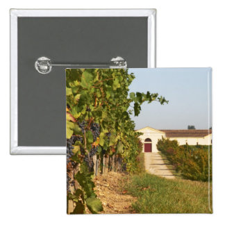 Vineyards, petit verdot vines and the winery in 2 inch square button