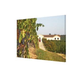 Vineyards, petit verdot vines and the winery in canvas print