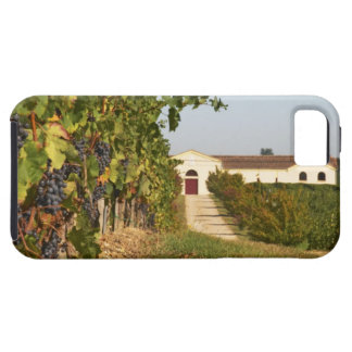 Vineyards, petit verdot vines and the winery in iPhone 5 cover