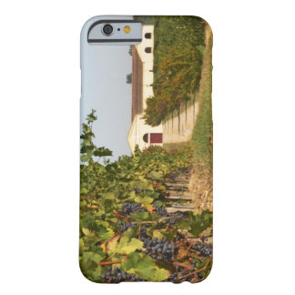 Vineyards, petit verdot vines and the winery in iPhone 6 case
