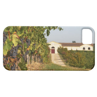 Vineyards, petit verdot vines and the winery in iPhone SE/5/5s case