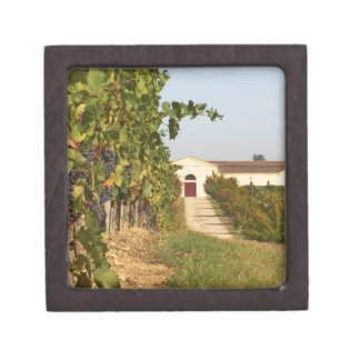 Vineyards, petit verdot vines and the winery in jewelry box