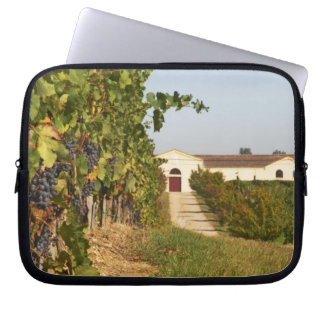 Vineyards, petit verdot vines and the winery in laptop computer sleeves