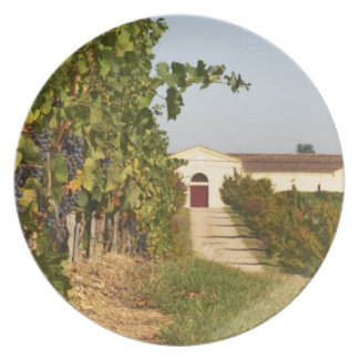 Vineyards, petit verdot vines and the winery in dinner plates