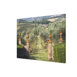 Vineyards, Tuscany, Italy Canvas Print