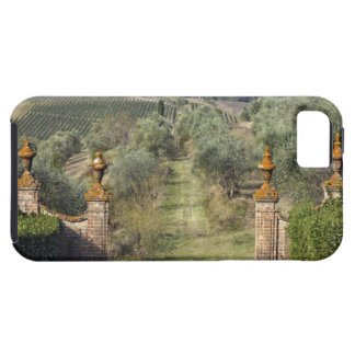 Vineyards, Tuscany, Italy iPhone 5 Cover