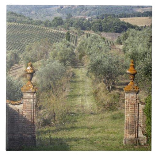 Vineyards, Tuscany, Italy Large Square Tile